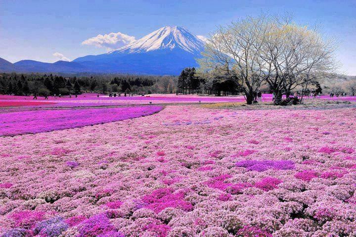tips-gunung-fuji