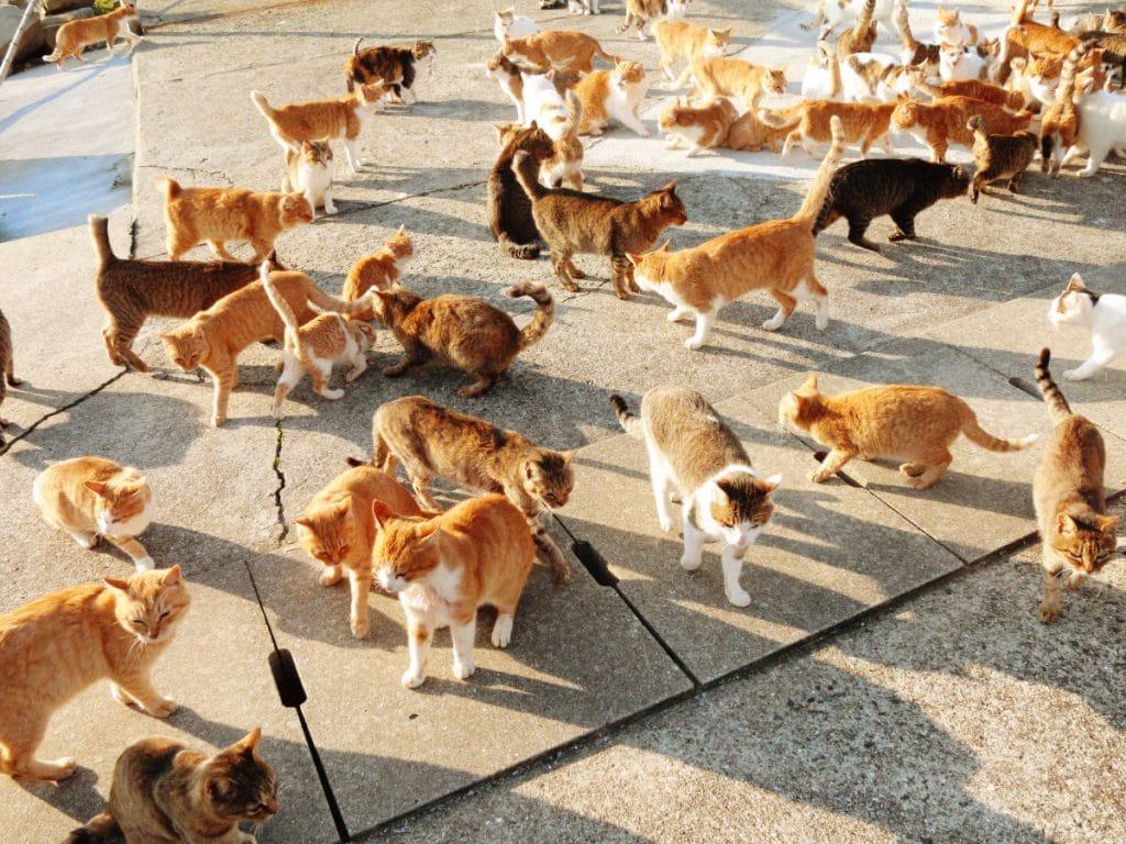 Orang Jepun Dan Kucing Melancong Ke Jepun